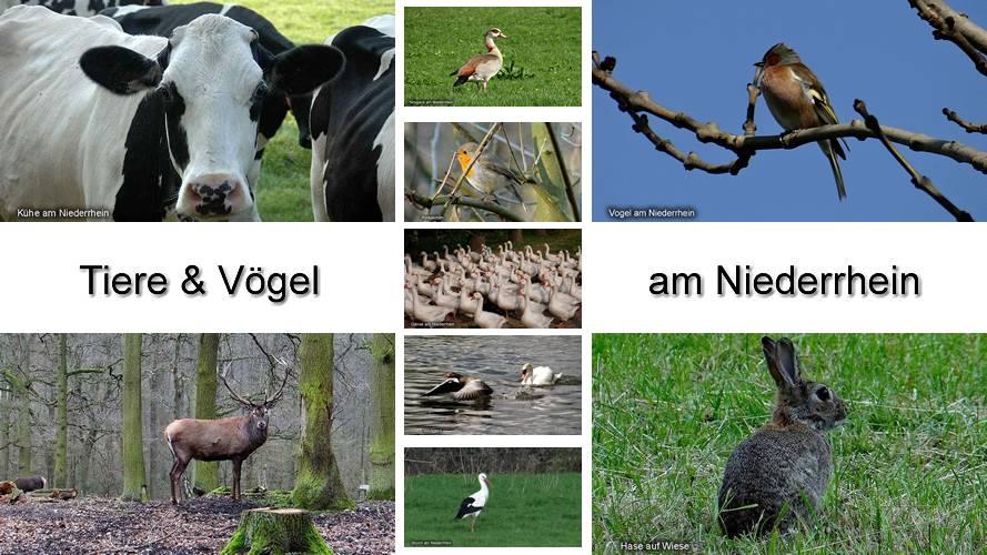 Tiere und Vögel