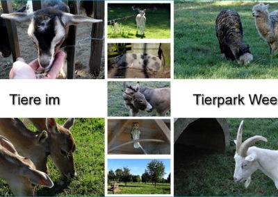 Tierpark Weeze