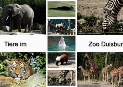 Tiere Zoo Duisburg