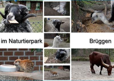 Tiere Naturtierpark Brüggen