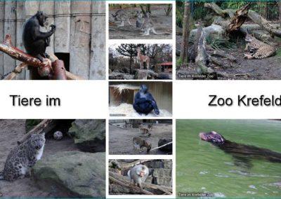 Tiere Zoo Krefeld