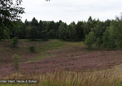 Brachter Wald