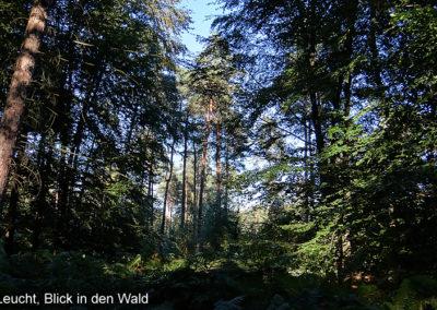 Die Leucht Waldgebiet