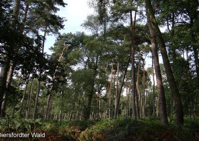 Diersfordter Wald