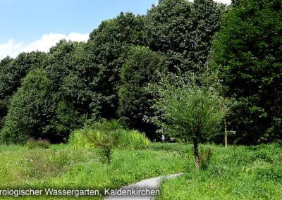 Geo hydrologischer Wassergarten