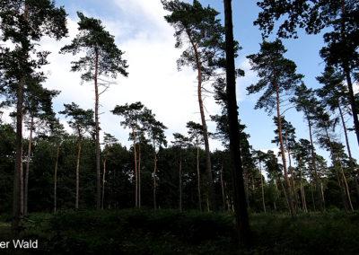 Hardter Wald