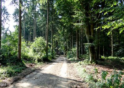 Ketelwald