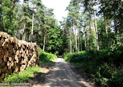 Klever Reichswald
