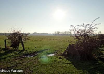 Rheinaue Walsum