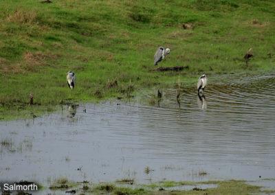 Salmorth Naturschutzgebiet