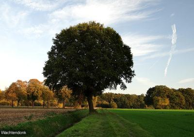 Rundum Wachtendonk