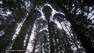Sequoiafarm