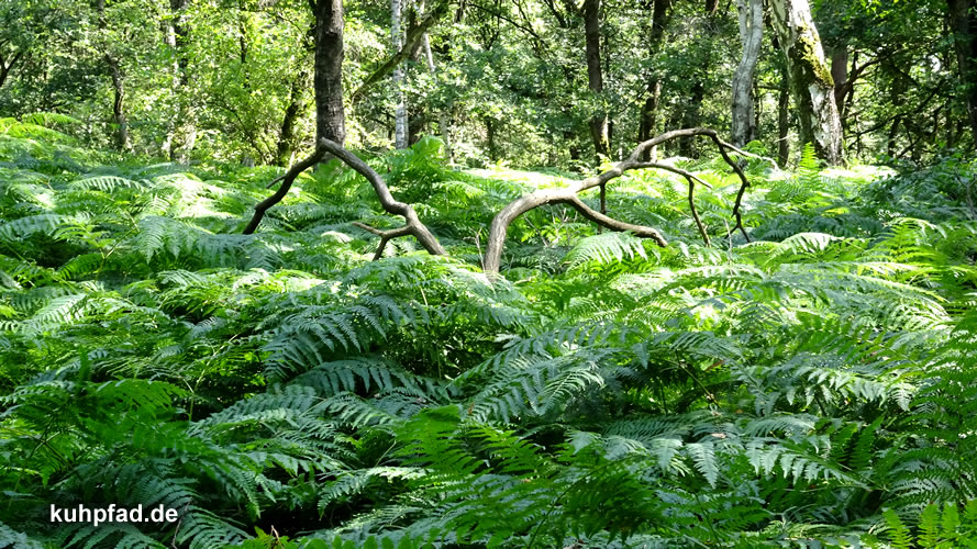 Wald Natur